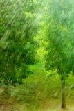 多雨外部窗口绿色背景纹理 库存照片