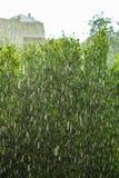 多雨外部窗口绿色背景纹理 免版税库存图片
