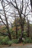 多雨天气的公园 库存照片
