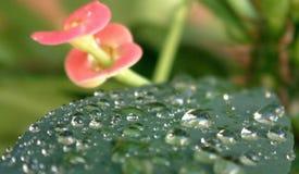 多雨日的叶子 免版税图库摄影