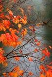 多雨日的秋天 库存照片