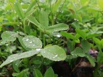 多雨时间 免版税库存照片
