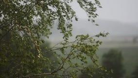 多雨的日 强风和雨 种植结构树 苹果覆盖花横向草甸本质星期日结构树 慢的行动 股票录像