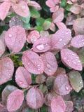 多雨的日 库存照片