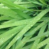 多雨的草 免版税库存图片