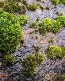 多雨石头生叶湿好天气颜色 库存图片