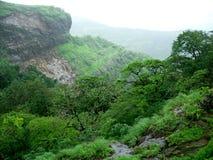 多雨结构树谷 库存照片