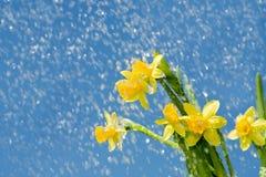 多雨背景的花 免版税库存图片