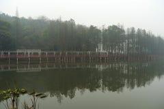 多雨水池在植物园里 免版税库存图片