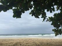 多雨Bocas 库存图片
