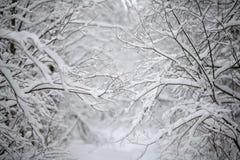多雪冷的冬天森林的风景 库存照片