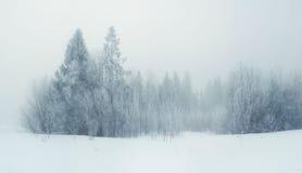 多雪冷的冬天森林的风景 免版税库存图片