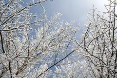 多雪在头顶上的分行 免版税库存照片