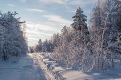 多雪小径的森林 免版税图库摄影