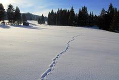 多雪幽静的风景 免版税库存图片