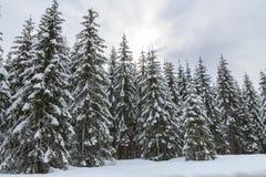 多雪横向的山 免版税库存照片