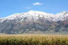 多雪玉米田的山 图库摄影