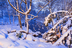 多雪的公园冬天风景在格但斯克 免版税库存图片