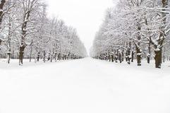 多雪的公园 免版税库存图片