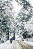 多雪的冬天杉树路  免版税图库摄影