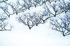 多雪的冬天风景的桃树果树园 免版税库存图片