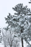 多雪的多暴风雨的天气的冬天森林 免版税库存照片