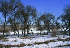 多雪的多暴风雨的天气的冬天森林 免版税图库摄影