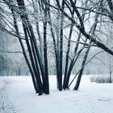 多雪的天 空的走道在公园 阿尔卑斯包括房子场面小的雪瑞士冬天森林 库存图片