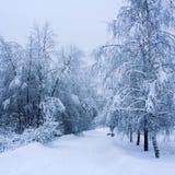 多雪的天 空的走道在公园 阿尔卑斯包括房子场面小的雪瑞士冬天森林 免版税库存图片