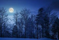 多雪的山坡的森林在晚上 图库摄影