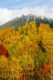 多雪的山峰和色的树在Daisetsuzan 免版税库存照片