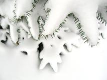 多雪的常青树 免版税库存图片