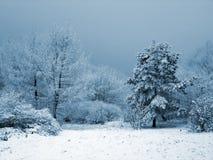 多雪的庭院 免版税库存图片