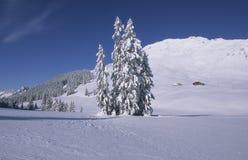多雪的杉木 免版税图库摄影