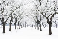 多雪的果树园 免版税库存照片