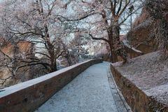 多雪的树之间的一条美丽的冬天道路 免版税图库摄影