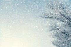 多雪的树枝框架反对蓝天的在snowfal期间 库存照片