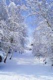 多雪的树走廊道路  一张照片 库存照片