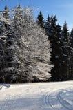 多雪的森林公路 库存图片