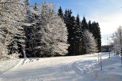 多雪的森林公路 免版税图库摄影