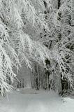多雪的森林公路 免版税库存照片