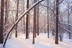 多雪的森林冬天背景  免版税库存图片