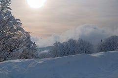 多雪的森林 免版税库存图片
