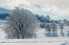 多雪的森林 库存图片