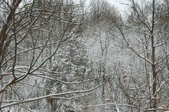多雪的森林 免版税图库摄影