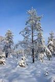 多雪的森林 免版税库存照片