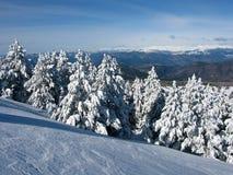 多雪的森林 库存照片