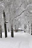 多雪的横向 免版税库存图片