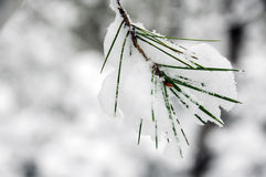 多雪的横向 免版税图库摄影