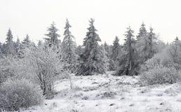 多雪的沼地 免版税库存图片
